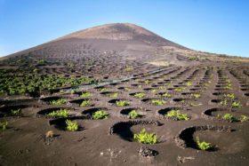 Những cánh đồng nho từ Sao Hỏa