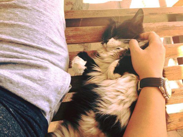 Síp: Mèo hoang