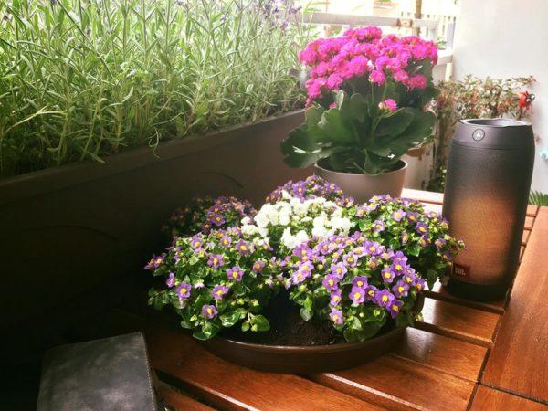 Chuyện tình Hoa Violet ngày Thứ Tư